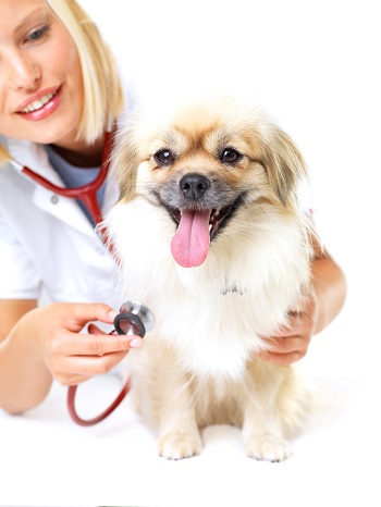 Your pet's once a year health check-up