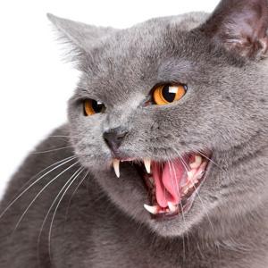 Do cats bite for no reason?