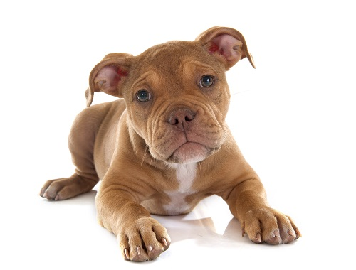 Lameness in young dogs