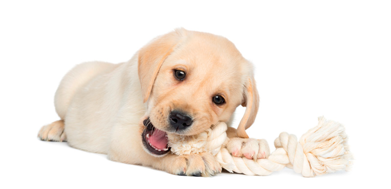 A new puppy - happiest days or worst nightmare?